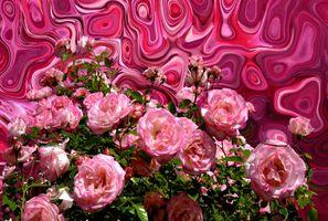 Фото бесплатно лепестки, цветок, цвет