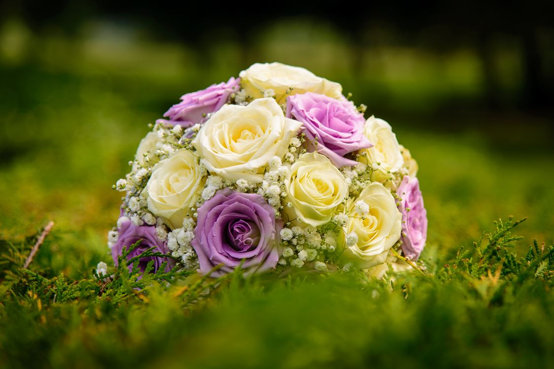 Фото бесплатно роза, букет, на траве - на рабочий стол