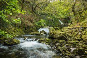 Бесплатные фото Водопад,Уэльс,Сноудония,парк,лес,деревья,пейзаж