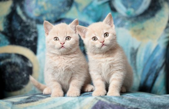 Photo free kittens, adorable, fluffy