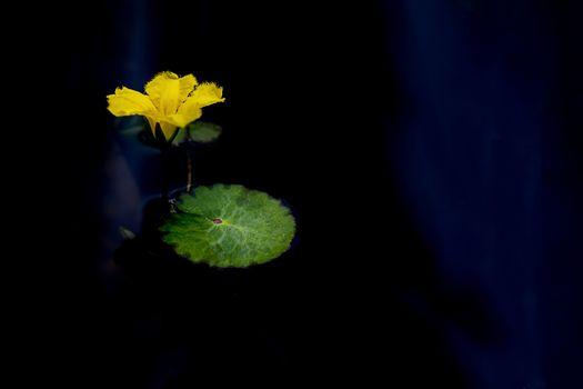 Photo free Lotus, flower, leaf