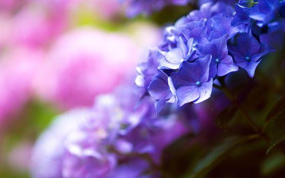 Фото бесплатно природа, ветвь, цветок