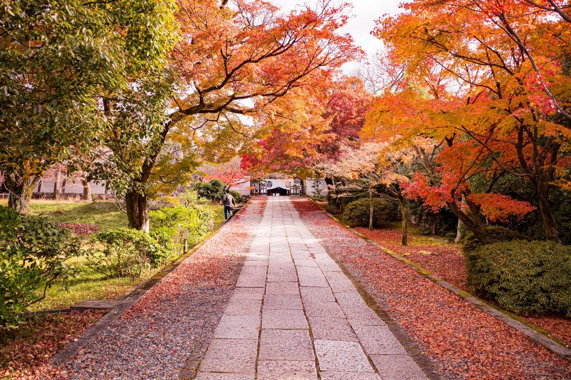 Фото бесплатно кустарники, парки, Япония - на рабочий стол