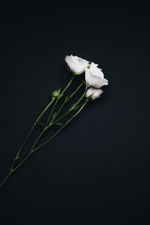 Фото бесплатно розы, букет, белый, черный фон, roses, bouquet, white, black background, цветы