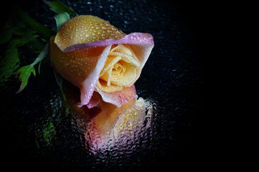 Photo free flower, rose, drop