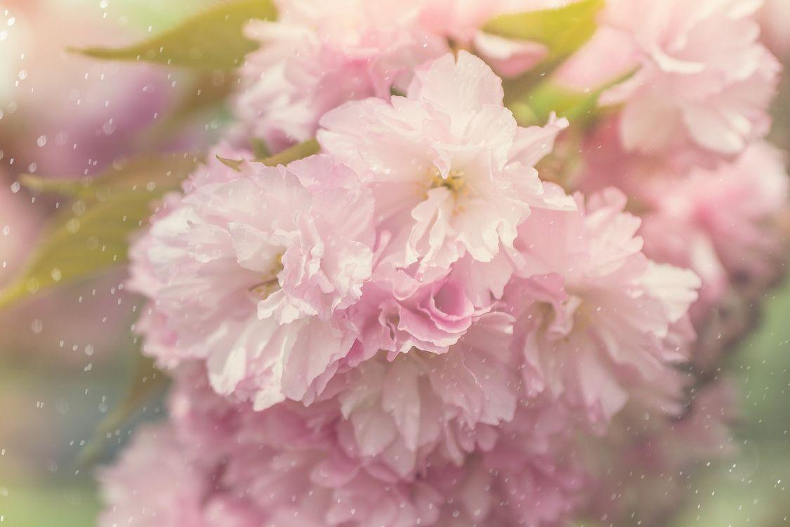 Фото бесплатно Beautiful Blossom, ветка цветов, цветок, цветы, цветочный, цветочная композиция, флора, красивые, красивый, цвет, оригинальный, красочный, лепестки, цветущие, цветение, цветы