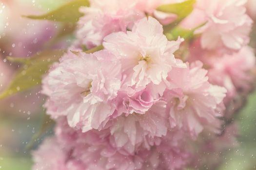 Фото бесплатно цветок, цветущий, оригинальный