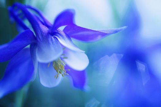 Фото бесплатно голубые цветы, макро, 2048x365 px