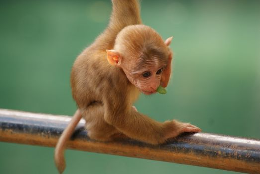 Photo free standing, funny, baby monkey