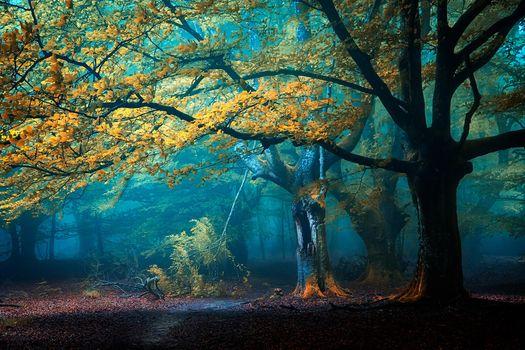 Фото картинки природа, осень