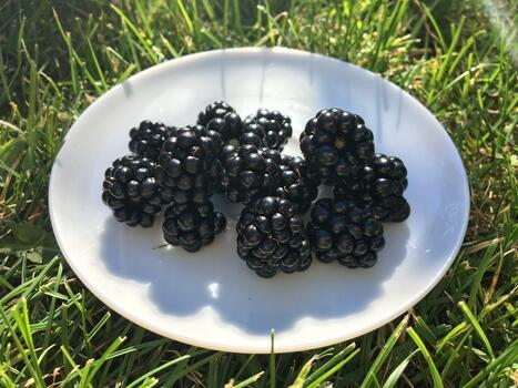 Фото бесплатно ежевики, трава, фрукты