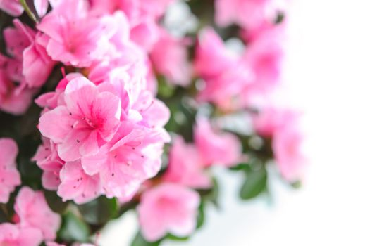 Фото бесплатно цветы, розовые, букет