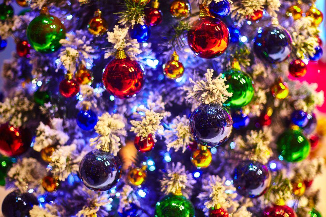 Рождественская елка · бесплатное фото