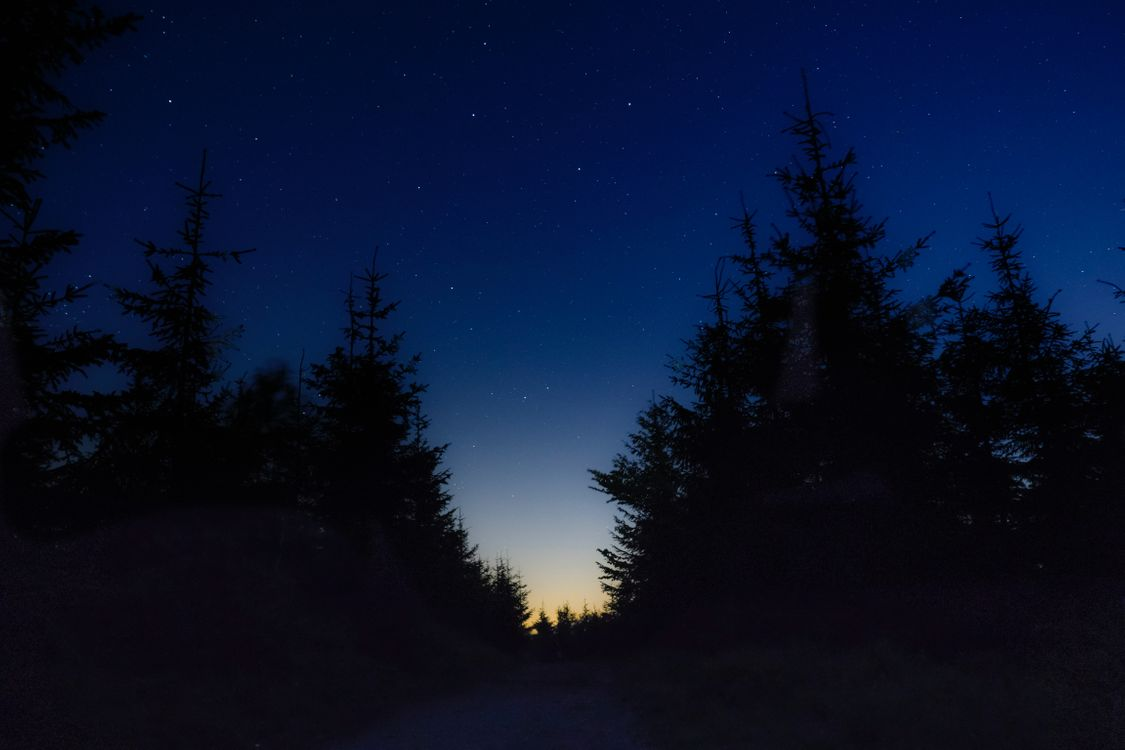 Фото бесплатно звездное небо, ночь, деревья, starry sky, night, trees, пейзажи - скачать на рабочий стол