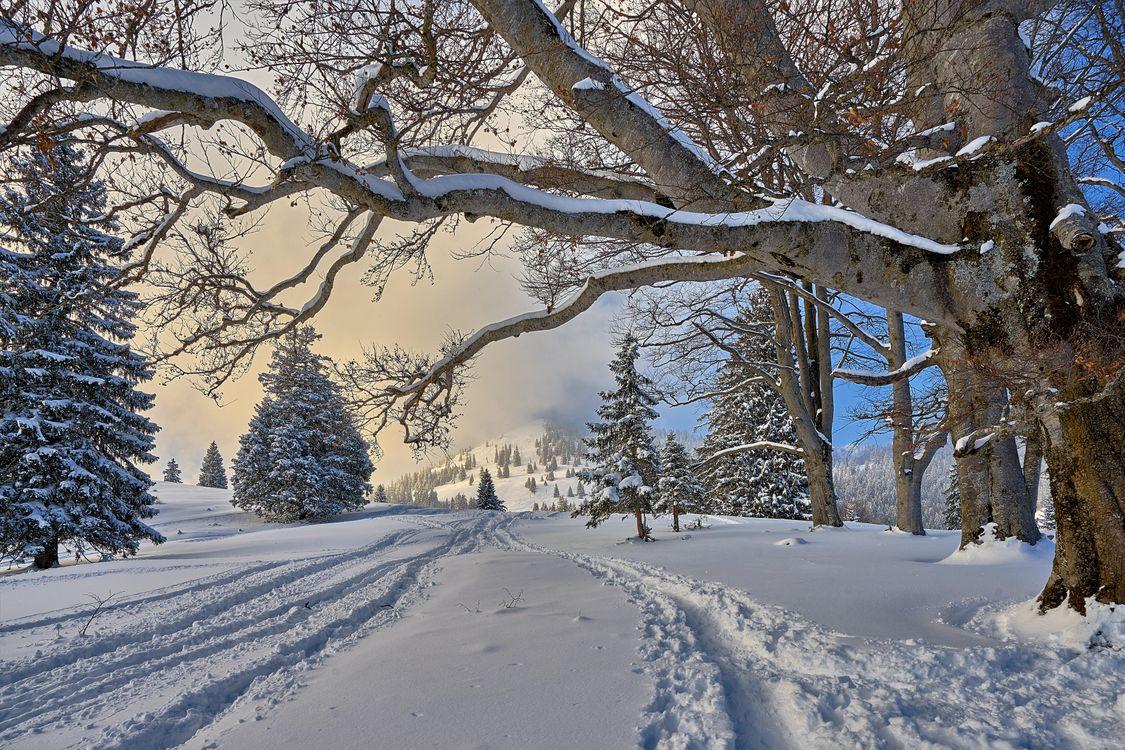 Фото бесплатно Германия, Альпы, зима, деревья, сугробы, пейзаж, пейзажи