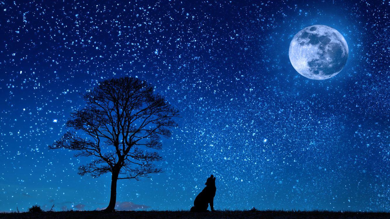 Фото бесплатно ночь, луна, собака, дерево, сияние, звёзды, вой, art, рендеринг