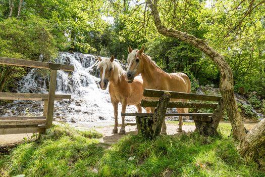 Фото бесплатно лошади, скамейка, водопад