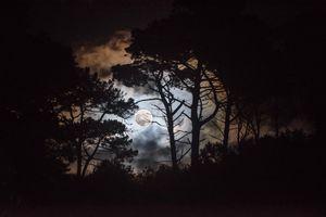 Бесплатные фото ночь,лес,деревья,луна,силуэты,небо,облака