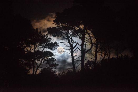 Бесплатные фото ночь,лес,деревья,луна,силуэты,небо,облака,пейзаж,ночной лес