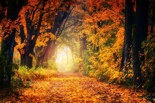 Photo free autumn gold, autumn leaves, forest