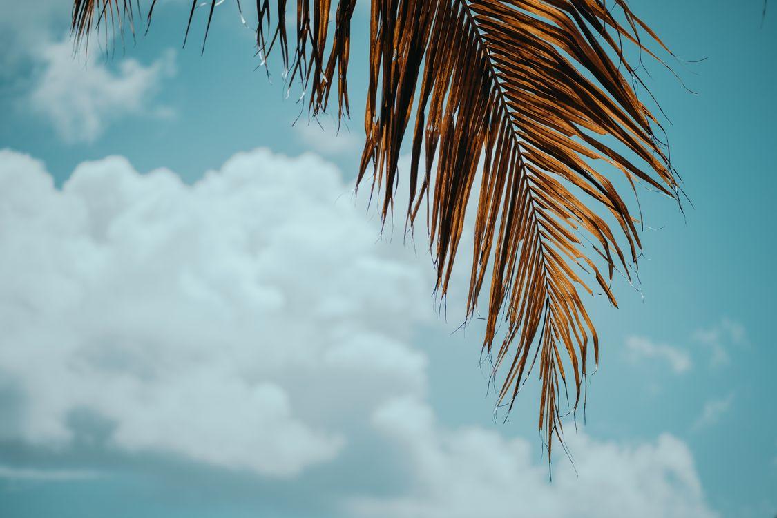 Фото пальмовые листья облака тропический - бесплатные картинки на Fonwall