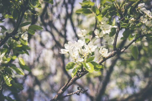 Фото бесплатно весна, цветения, ветвь