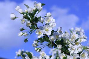 Фото бесплатно весна, флора, дерево