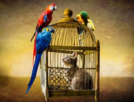 Фото бесплатно котёнок, попугаи, клетка