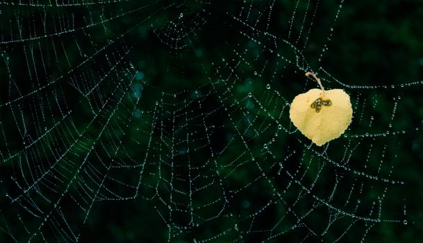 Фото бесплатно ночь, паутина, капли
