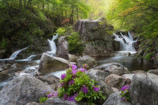 Заставки река, цветы, пейзаж