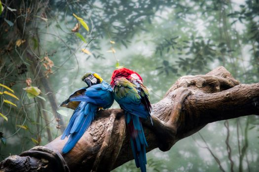 Photo free two parrots, colorful, birds