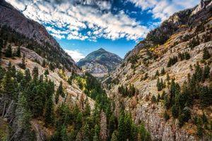 Photo free forest, autumn, Colorado