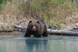 Фото бесплатно Животное, Хищник, Аляска