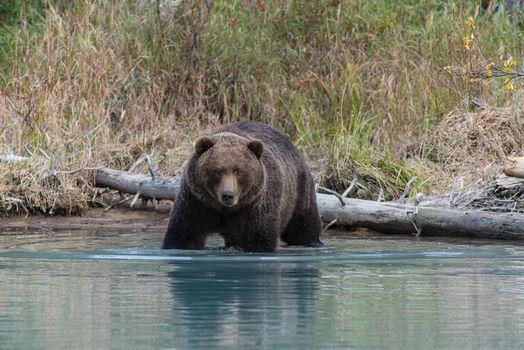 Photo free Animal, Predator, Alaska