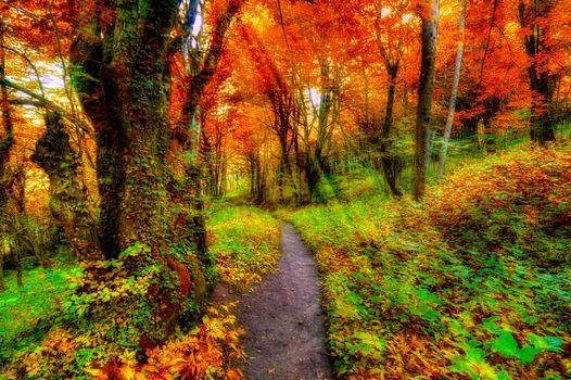 Заставки путь, природа, осенние цвета