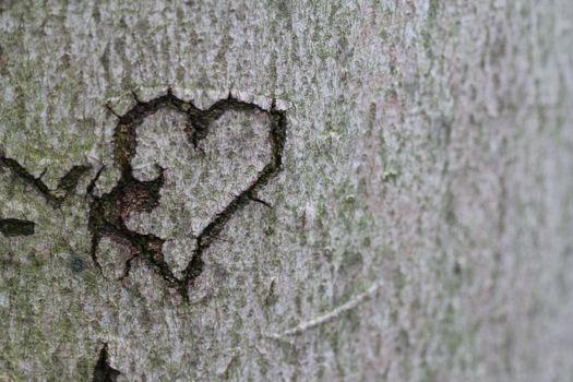 Фото бесплатно древесное растение, вместе, символ