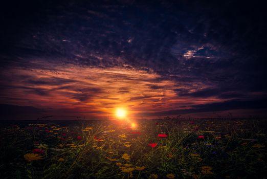 Photo free sun, sky, poppies