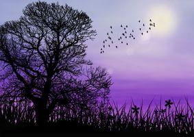 Фото бесплатно закат, силуэты, дерево