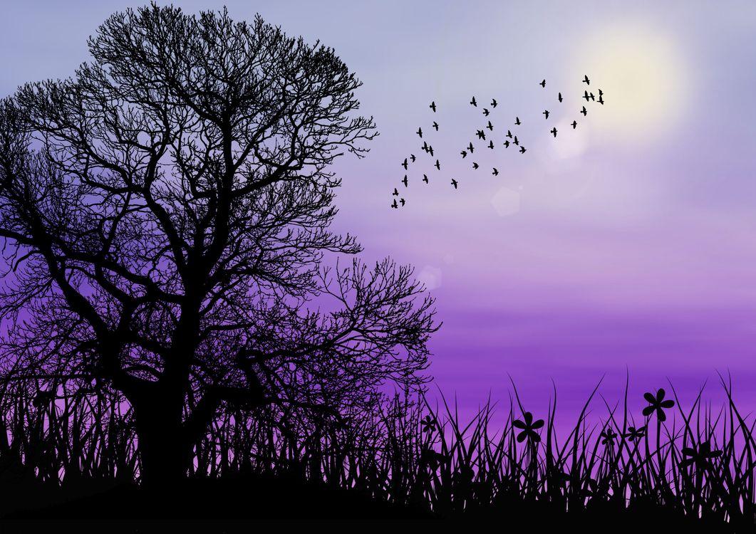 Фото бесплатно закат, силуэты, дерево - на рабочий стол