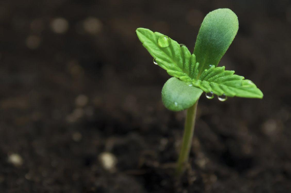 Фото бесплатно 420, наркотики, марихуана - на рабочий стол