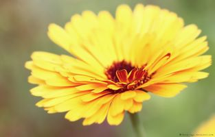 Фото бесплатно природа, фотографии, макросъемка