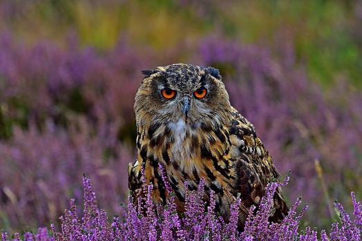 Фото бесплатно сова, клумба, хищные птицы