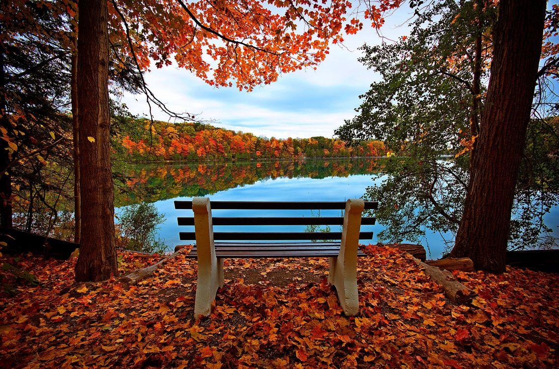 Фото бесплатно прогулки, скамейка, лес - на рабочий стол