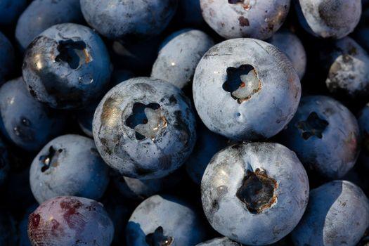 Фото бесплатно голубика, ягоды, синяя