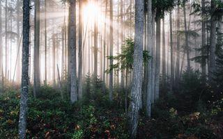 Бесплатные фото сказка,лес,пейзаж,облако,обои,сад,цветок
