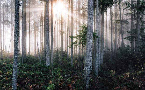 Заставки сказка, лес, пейзаж