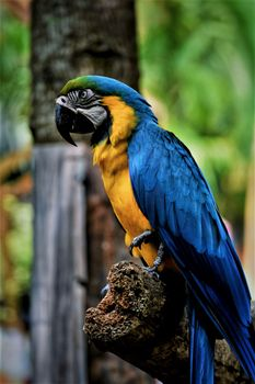 Photo free macaw parrot, beak, bird