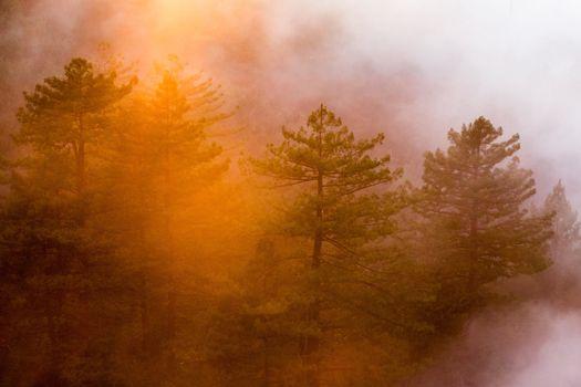 Photo free dawn, fog, leaf