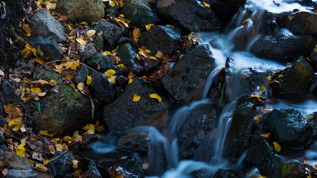 Photo free rock, leaves, body of water