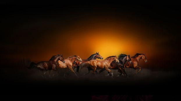Заставки лошади, искусство, спорт
